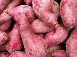 红薯淀粉的烘干方法